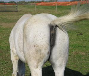 [Image: horses-ass1.jpg]